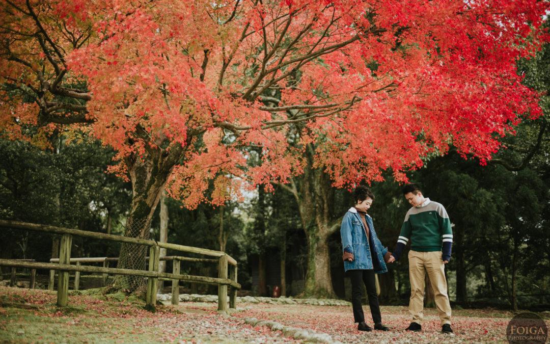 京都奈良三日遊