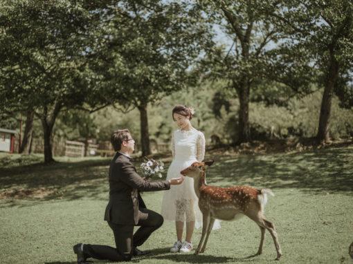 小鹿的見證